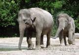 Elefanten (0081)