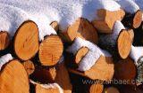 Holz im Schnee (2670)
