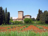 Toscana (175)