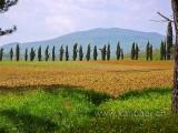San Galgano (035)
