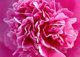 Blume / Flower (4400)