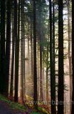 Wald / Forest (7784)