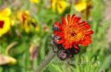 Blume / Flower (01226)