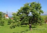 Schoenbrunn (01073)