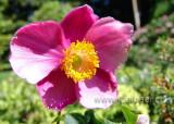 Blume / Flower (02839)
