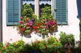 Blumenfenster (0023)