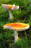 Pilze / Mushrooms (8422)