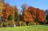 Herbstwald (7670)