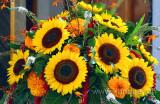Sonnenblumen / Sunflowers (5956)