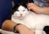Katze / Cat (8479)