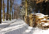 Im Wald / In the forest (02806)