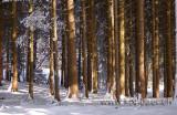 Im Wald (8817)