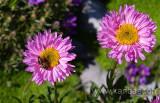 Blumen / Flowers (3781)