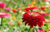 Blumen / Flowers (02884)