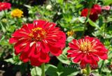 Im Garten (02910)
