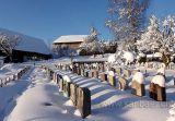 Friedhof (03136)