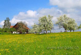 Fruehling / Spring (04739)