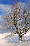 Baum im Winter (0104)