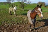 Pferde / Horses (60841)