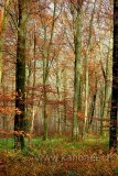 Wald / Forest (67399)