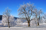 Morgenfrost (6488)
