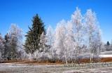 Frostig / Frosty (6493)