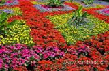 Blumen / Flowers (4150)