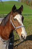 Pferd / Horse (60837)