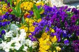 Fruehling / Spring (73206)