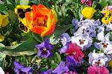 Blumenbeet (73347)