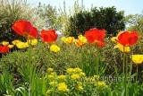 Blumenbeet (73967)