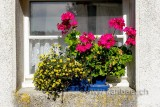 Blumen (78123)