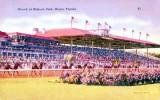Crowd at Hialeah Park (postcard)