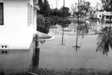 1947 - Hammond Drive in Miami Springs, Florida, after the Flood of 1947 caused by Hurricane VI