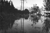 1947 - Miami Springs neighborhood after the Flood of 1947 caused by Hurricane VI