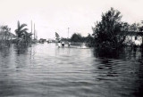 1947 - Flood of 1947 at SE 10th Place and 8th Court in Hialeah