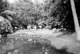 1963 - Flamingos at the Miami Springs Villas