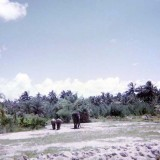 1970 - elephants at the Crandon Park Zoo