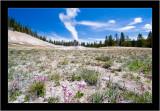 Lone Star Geyser with Flowers.jpg