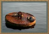 Rusty Buoy