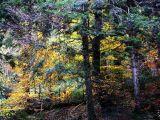 L'automne au col de Garroc