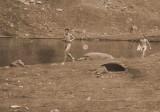 A poil autour du lac
