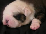 Roxys pup -13.jpg