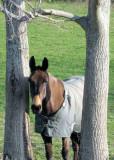 agnes de mule at Green Meads 5/07 - photo taken by Jeff Morse