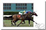 horse race challenge.jpg
