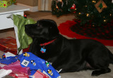lucy on christmas