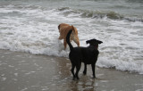 sam and lucy on the beach