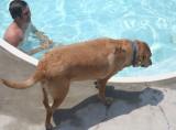 sam considers a swim