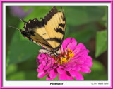 ButterflyBrokenWing2.jpg