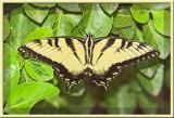 ButterflyJuly14_06.jpg